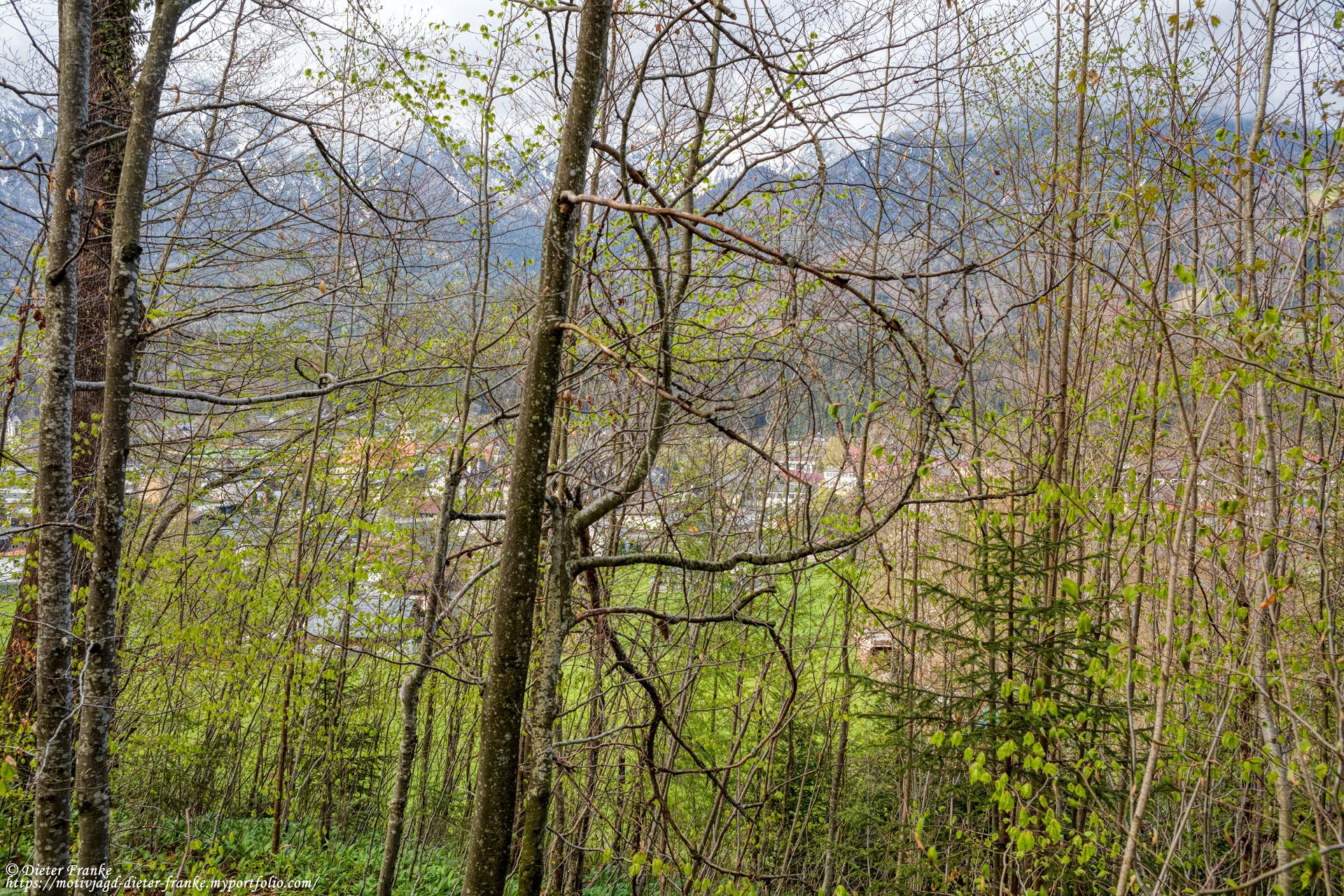 Bankerl 5 - Schötzenwaldweg